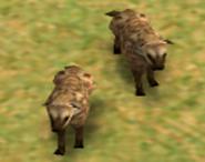 Hyenas AOM