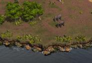 Deccan elephants