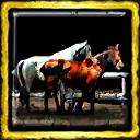 Cheyenne Horse Trading