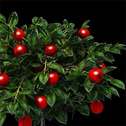 Berry (DE)