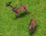 Deer AOM