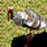 Turkey-icon-aoe2.jpg