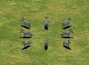 Zebra AoEII