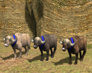 Water Buffalo variants AoE3