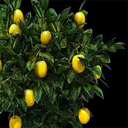 Fruitbush aoe2DE