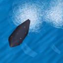 Whale AoM