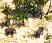 Elephants Ceylon