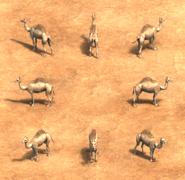 Camel view aoe2de