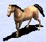 Horse aoc