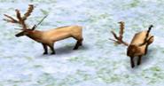 Elks AOM