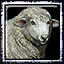 Aoe3 sheep icon