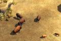 Bison herd.png