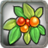 Plant Bush C