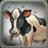 Cattle C