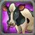 Cattle E