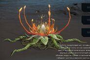 Росток, цветочный узел
