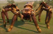 Королева пауков-охотников