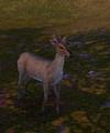 Hetian Sheep