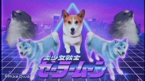 Dog meme.avi