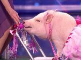 Smooch Piggy