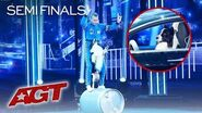 Lukas & Falco Delivers Some Of The CUTEST And AMAZING Dog Tricks On AGT! - America's Got Talent 2019