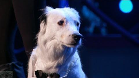 America's Got Talent 2017 Sara & Hero the Dog Intro & Performance Judge Cuts S12E08