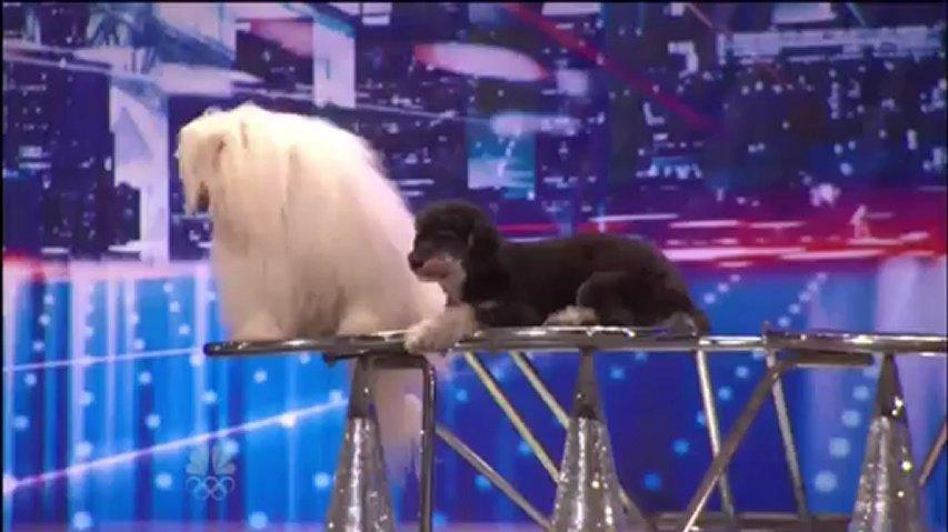 Olate Dogs, 19, 55, Auditions New York ~ America's Got Talent 2012