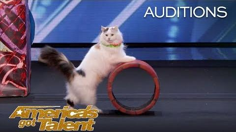 The Savitsky Cats Super Trained Cats Perform Exciting Routine - America's Got Talent 2018