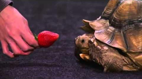 America's Got Talent Tessie The Tortoise Auditions 5
