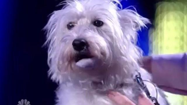 2012 ~14. 1st Quarterfinal Live ~ America's Got Talent 2012