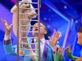 Menestrelli Dog Show