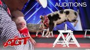 PIGS Got Talent?! Pork Chop Revue Brings Funny and Talented Pigs To AGT! - America's Got Talent 2020