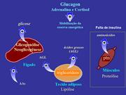 Pancreas 7