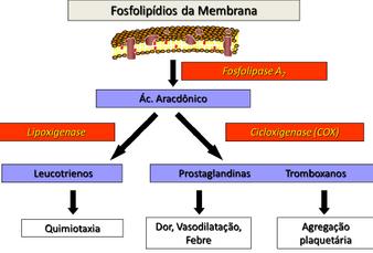 Ativação da Fosfolipase A2