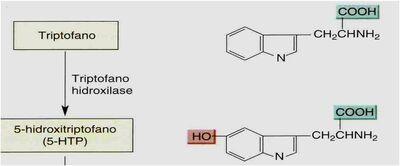 Serotonina - triptofano hidroxilase