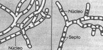 Cenocitica