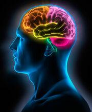 Cerebro-Neuromarketing