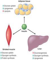 Pancreas 3