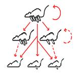 Ratos - reposição