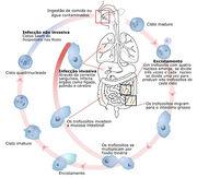 Ciclo biológico 3