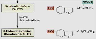 Serotonina - 5-HTP descarboxilase