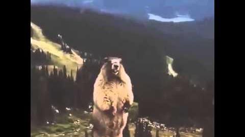 Screaming Beaver Marmot LOL!