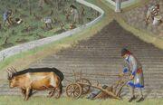 Enluminure représentant le labour d'un champ avec une charrue tirée par deux bœufs. À l'arrière-plan, des paysans coupent des ceps de vigne.
