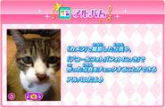 Aisuma app 14