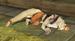 Haorunerk's Corpse