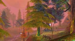 Moslan Forest