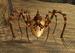 Agile Arachna