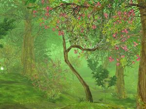 Daminu Forest