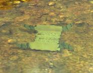 Worn Document