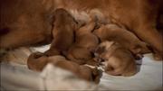 Newborn Buddies
